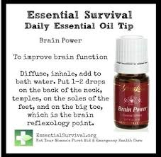 brain power eo by yl essential oils pinterest