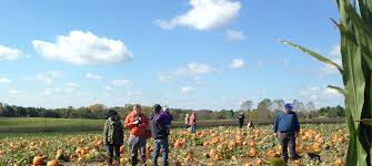 Best Pumpkin Patch Des Moines by Wills Family Orchard U2013 33130 Panther Creek Rd Adel Ia 515 321 1847