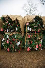 Fraser Fir Christmas Trees Nc by O Fraser Fir North Carolina U0027s Christmas Tree U2014 Bit U0026 Grain