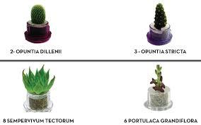 plante de bureau plante bureau plantes plantes with plante bureau excellent