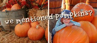 Schaake Pumpkin Patch by Kc Pumpkin Patch Olathe Ks Fall Fun And Pumpkins Galore