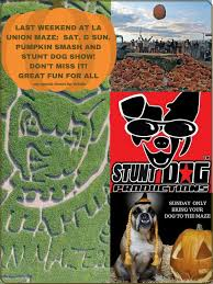 Las Cruces Pumpkin Patch Maze by Home Hours And Pricing