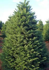 The 1 Christmas Tree On West Coast Flemings Holiday Lighting