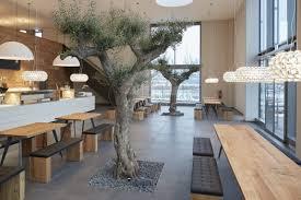 olivenbaum kaufen tojas mediterraner baumhandel referenzen