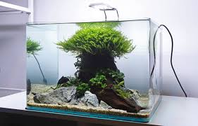 Complete Established 35L Aquascape For Sale! | UK Aquatic Plant ... An Inrmediate Guide To Aquascaping Aquaec Tropical Fish Most Beautiful Aquascapes Undwater Landscapes Youtube 30 Most Amazing Aquascapes And Planted Fish Tank Ever 1 The Beautiful Luxury Aquaria Creating With Earth Water Photo Planted Axolotl Aquascape Tank Caudataorg 20 Of Places On Planet This Is Why You Can Forum Favourites By Very Nice Triangular Appartment Nano Cube Aquascape Nature Aquarium Aquascaping Enrico A Collection Of Kristelvdakker Pearltrees