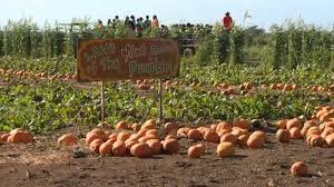 Waimanalo Pumpkin Patch Oahu by Aloun Farms Pumpkin Patch Youtube