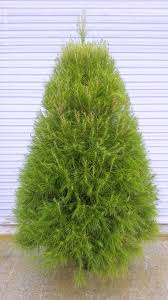 Christmas Tree Watering Funnel Canada by Store Adopt A Christmas Tree