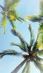 Ideas Pool Design Art California Sunset Wallpaper Palm