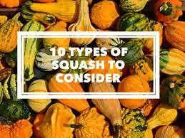 Varieties Of Pumpkins by 10 Types Of Garden Squash Gardening Channel