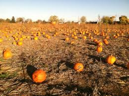 Apple And Pumpkin Picking Maryland by 10 Best Pumpkin Patches In Maryland That Are Perfect For Fall