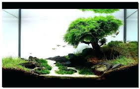 Aquascape Nature Aquarium And Wiki Appartment Aquascape Waterfall ... Aquascape Pond Pump Problems Tag Aquascape Pond Products Pumps Red Rock Journal By James Findley The Green Machine Cuisine Live Designs Set Up Idea Fish Aquascapes Water Garden Installation Setup Articles With Freshwater Aquarium Community Tank Post Your Favorite Natural Ipirations And Adventures In Aquascaping Tanks Books Lets Start With A Ada Learn All The Basics Of Niwa Pisces Amazing Amazon Beautify Home Unique
