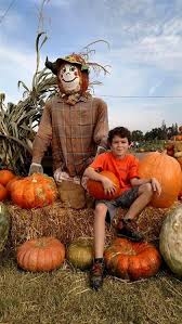 Hillcrest Farms Pumpkin Patch by Vossler Farms Pumpkin Patch And Corn Maze California Haunted Houses
