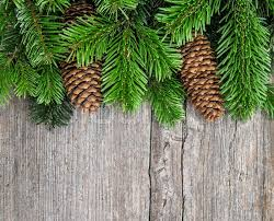 Christmas Tree Branches With Pine Cones Green Border From Undecorated Evergreen Twigs