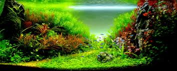 Stunning Colors | Aquascaping | Pinterest | Aquariums, Planted ... 329 Best Aquascape Images On Pinterest Aquarium Ideas Floratic Visiting Paradise At Shah Alam Planted Aquarium Aquascape Things Aquariums Aquascaping Malaysia Diy Pertama Kali Aquascaping October 2010 Of The Month Ikebana Aquascaping World Sumida Aquarium Reloaded Fish Tanks And Designs Awesome A Moss Experiment Its All About Current Low Tech Tank Cuisine Wonderful Small Cubical Styles Planted The Surreal Submarine Amuse