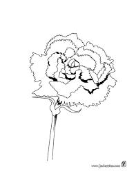 Poinsettia Noël Isolé Fleur Vintage Illustration Vectorielle Noir