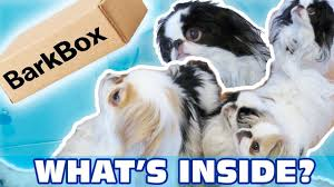 Barkbox - Our First Month's Box, The Japanese Chins Help Part #1 Free Extra Toy In Every Barkbox Offer The Subscription Newly Leaked Secrets To Barkbox Coupon Uncovered Double Your First Box For Free With Ruckus The Eskie Barkbox Promo Venarianformulated Dog Fish Oil Skin Coat Review Giveaway September 2013 Month Of Use Exclusive Code Santa Hat Get Grinch Just 15 14 Off Hello Lazy Cookies Lazydogcookies Twitter Orthopedic Ultra Plush Pssurerelief Memory Foam That Touch Pit