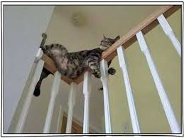 cat stairs confessions of an insomniac cat lover