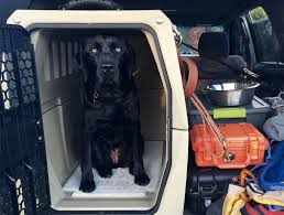 100 Truck Dog Kennels Blog Post Page THE BEST CRATE FOR A WORKING DOG