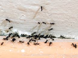 How to keep ants from invading your kitchen  Appliances line Blog