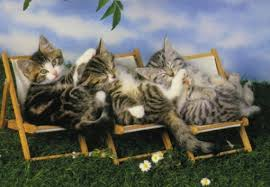 cats on deck 10 summer cats relaxing in deckchairs