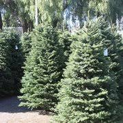 Boy Scout Christmas Tree Recycling San Diego by Sea Scouts Christmas Trees Temp Closed 17 Reviews Christmas