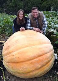 Pumpkin Patch South Bend by Guentzel Family Farms Patch Produces Giant Pumpkin Local News