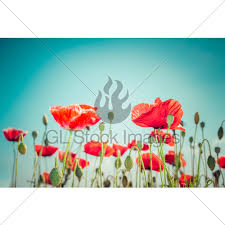 Floral Background In Vintage Style For Greeting