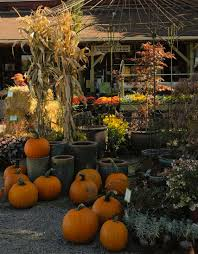 Larkspur Pumpkin Patch by Happy Harvest Happenings