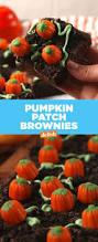 Porcupine Eats Pumpkin 100 pumpkin idea 4 pumpkin eating pumpkin youtube valas