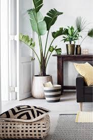 bananenpflanze als deko für wohnzimmer dekoration