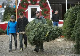West Seattle Christmas Tree Disposal by Christmas Trees Topical Coverage At The Spokesman Review