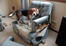 comment empecher chien de monter sur le canapé apprendre à chien à rester seul eduquer à la solitude