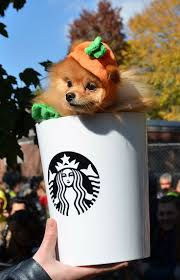 Pumpkin Spice Latte Mms by 171 Best Dogs U0026 Halloween Images On Pinterest Nyc The O U0027jays
