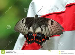 100 Butterfly House Melbourne Stock Photo Image Of Natural Detailed Design 83688940