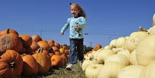 Pumpkin Patch Sacramento by Baltimore U0027s Best Pumpkin Patches Cbs Baltimore