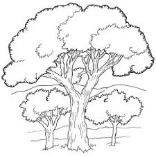 Oak Tree in the Forest Coloring Page 300x300