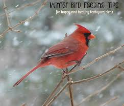 Birds In Winter Get Ready For The Great Backyard Bird Count Photo ... The Joy Of Bird Feeding Essential Guide To Attracting And Birders Break Records For Great Backyard Count Michigan Radio New Guides Backyard Birding Add Birders Joyment Aerial Birds Socks Absolute Birding Co East Petersburg Shopping Authentic Common Redpoll Photosgreat South 100 Watcher Attract To Your Best 25 Watching Ideas On Pinterest Pretty Birds In Burlington Vermont Photos In Winter Get Ready For Photo 20 Best Birdfeeders Images Feeding Station