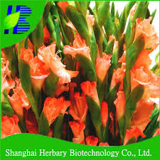 china flower bulbs for sale wholesale alibaba