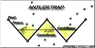 shed antler traps texasbowhunter com community discussion forums