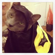cat batman costume inspiration costume ideas from my s cat catster
