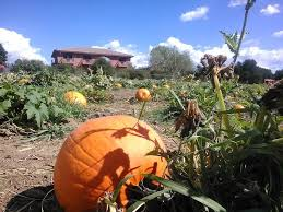 Pick Of The Patch Pumpkins Santa Clara by More Haunts Are Opening Their Doors For The Halloween Season Here