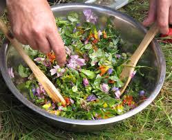 plantes culinaires et cuisine sauvage immersion montagne