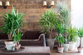 9 perfekte pflanzen für das schlafzimmer homify