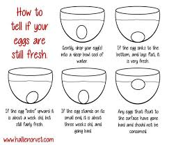 Bad Eggs Float Or Sink In Water by Kitchen Hack How To Know If An Egg Is Fresh Welcome To Kenny S Blog
