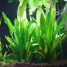 Spongebob Aquarium Decorating Kit by Aquarium Decorations Ebay
