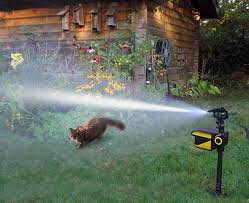 Amazon.com : ELENKER Scarecrow Solar Motion Activated Animal ... Sprinklers Photos Portland Rain Bird 32eti Easy To Install Automatic Sprinkler System 25 Unique Kids Sprinkler Ideas On Pinterest Drive Through Car Tips Installing A Diy Fun Outdoor Acvities To Battle Sumrtime Heat Good Matters Blog When Putting In System How Do You Measure The Pipe For Erground Open Dirt Trenches During Simple Pvc The Crafty Stalker How Howtos Irrigation Repair Landscaping Systems And Backyard Fun Youtube 10 Ways You Can Save Water In
