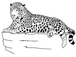 Coloring Pictures Of Animals And Their Homes That Lay Eggs Realistic Pages Printable Sheets Kids Get