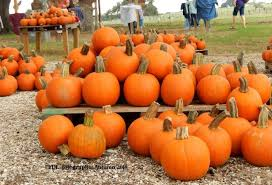 Pumpkin Farms In South Georgia by 10 Great Pumpkin Patches In Texas