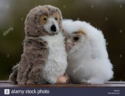 Orbit' The 5 Week-old Baby Barn Owl Who Has Been Hand Reared By ... Standing Twelve Weekold Barn Owl Side View Stock Photo Getty Images Boxes South Downs National Park Authority Old Man Of Minsmere Aka John Richardson Gorgeous Birds In Folklore Owls And Ravens Randomdescent Orbit The 5 Weekold Baby Who Has Been Hand Ared By Owl Wikipedia Coda Falconry On Twitter Our 7 Week Old Barn Was Bred At Dont Go Deaf New Zealand Geographic Australian Masked Rescuing Owls Tropic Wonder Audubon Art Print Vintage Nature Bird Eyfs Blog Archive Wise