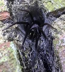 Remains Of The Day Spiders by Stomach Churning Moment Dad Finds Nest Of Hundreds Of Venomous
